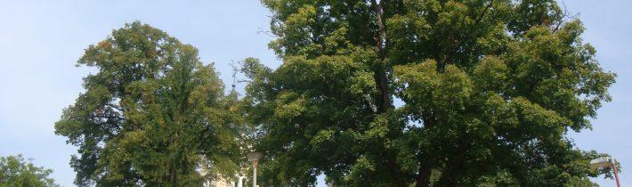 Pružinské stromy